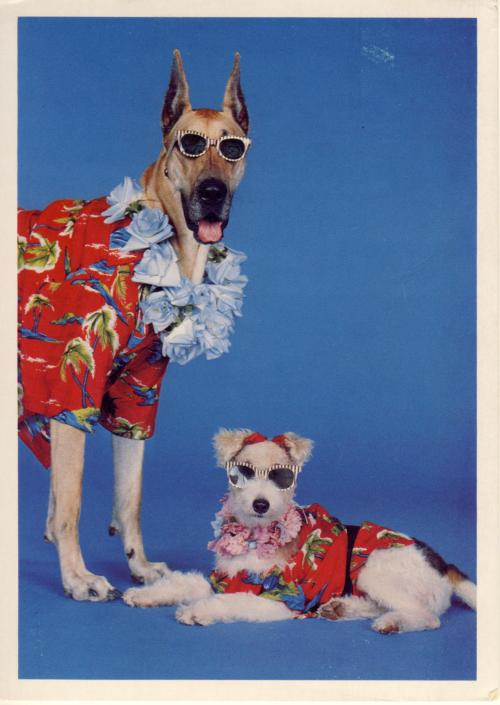 Dogs with Shades